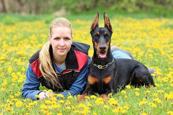 Doberman pinscher   Guard Dogs